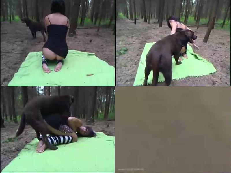 175757220 0644 hmz forest animal porn action - Forest Animal Porn Action / Amateur ZooSex