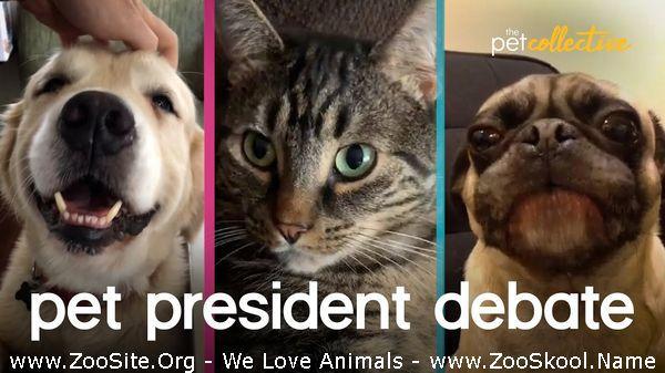 177151465 0034 fun crazy pet presidential debate 2020 - Crazy Pet Presidential Debate 2020