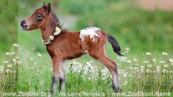177151492 0037 fun cute and funny baby pony horses compilation   cutest baby animal videos - Cute And Funny Baby Pony Horses Compilation - Cutest Baby Animal Videos
