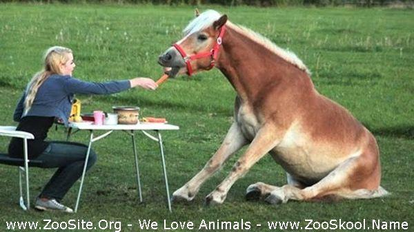 177151507 0040 fun cute and funny horse videos compilation - Cute And Funny Horse Videos Compilation