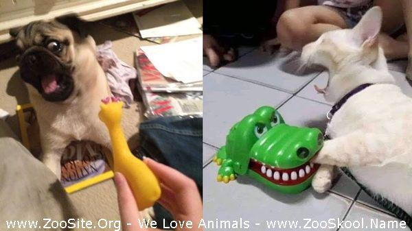 177152154 0064 fun dogs and cats reaction to toy 2020   funny dog and cats reaction compil - Dogs And Cats Reaction To Toy 2020 - Funny Dog And Cat's Reaction Compilation