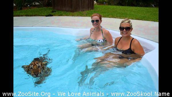 177152160 0066 fun sexy girl swim with tiger - Sexy Girl Swim With Tiger
