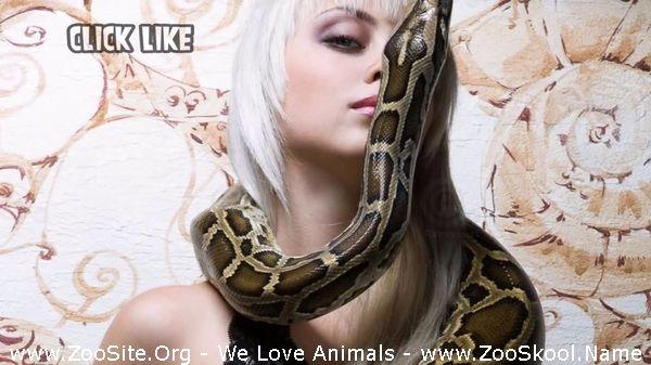177152195 0072 fun sexiest women with snakes - Sexiest Women With Snakes