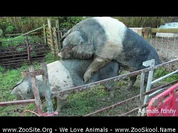 177152237 0081 fun seduction tactics  psychotic lovers in nature incredible  animals matin - Seduction Tactics , Psychotic Lovers In Nature Incredible , Animals Mating Fail Compilation